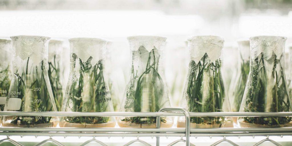 botanical-laboratory