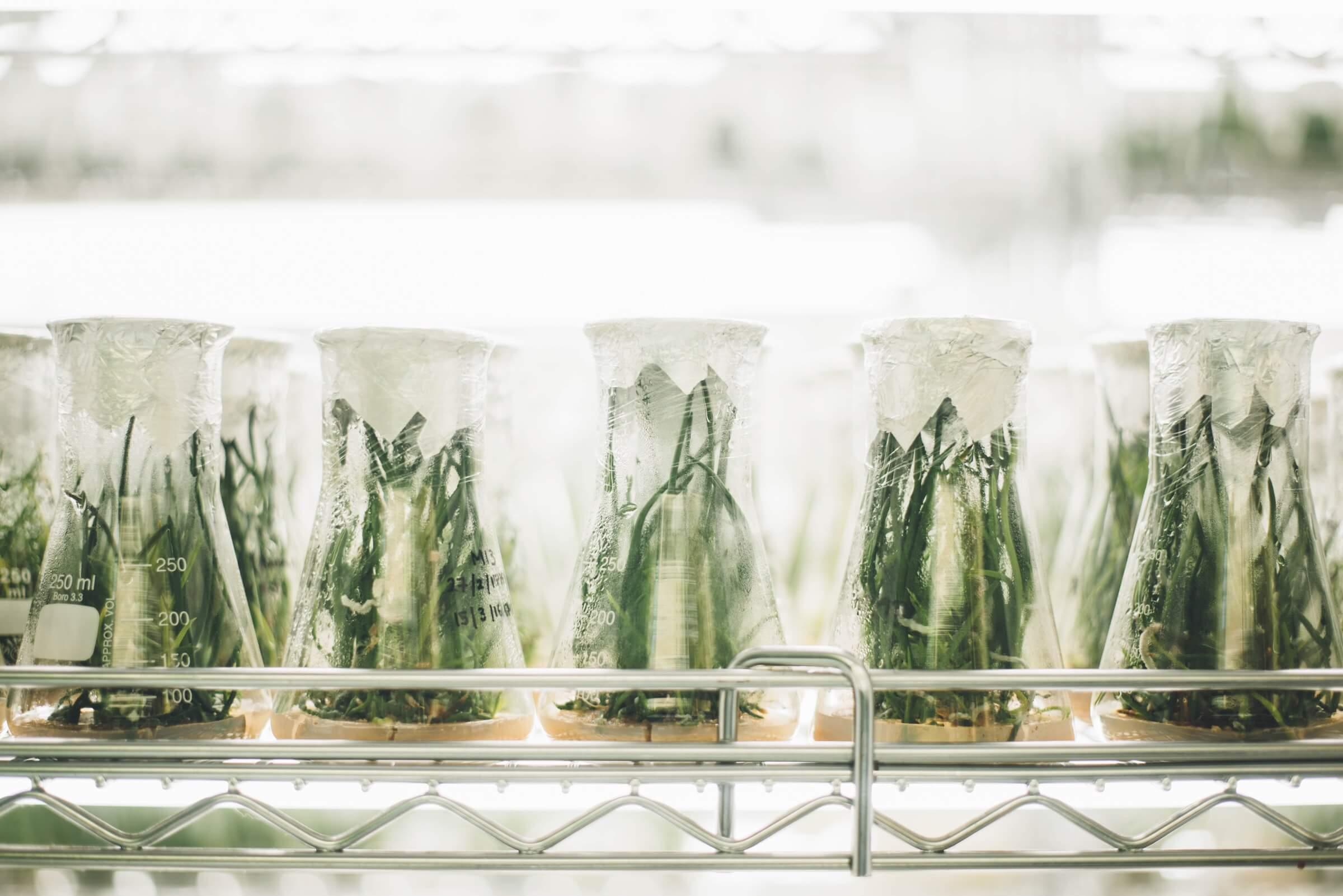 botanisches-labor